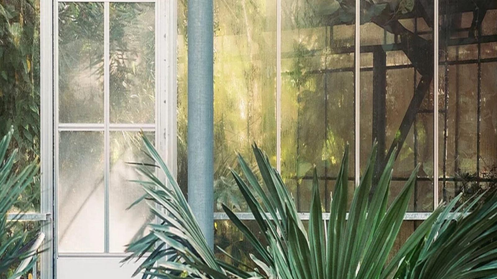 Transparent Wood Wall